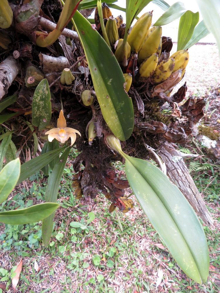 กล้วยไม้ภูหลวง, เขตรักษาพันธุ์สัตว